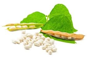 Soja-Lecithin für Gehirn, Herz und Übergewicht