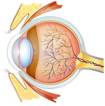Irisdiagnose. Diagnose durch die Augen