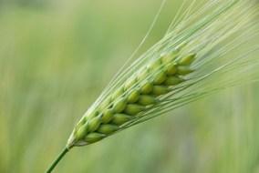 Online Landwirtschafts- Kurs