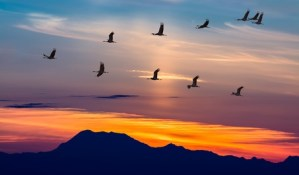 ECOTUR fördert Vogelbeobachtung in Spanien