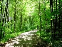 Der Mann, und die Bäume wo das Glück wuchs