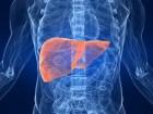 Fünf Tipps für die Gesundheit der Leber