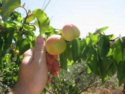 Die ökologische Landwirtschaft im Tajo