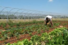 Bio-Landbau und Red Natura 2000 ohne Hilfe