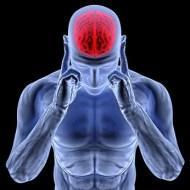 Phosphene Mischung: natürliche Entwicklung der Erinnerung und Intelligenz
