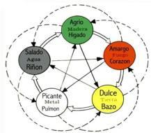 Der Geschmack von Lebensmitteln, therapeutische Wirkung der TCM