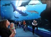 Atlanta Georgia Aquarium Tickets