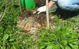 4 Handvoll von unserem reifen Mulch