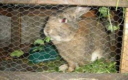 4kg Kaninchen... bald am Spiess ?