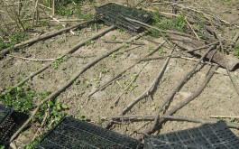 Pflanzenschutz gegen Hϋhner