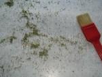 Brennessel Samen getrocknet mit Pinsel Arbeitstisch wischen