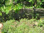Kostenlos Garten gestalten DIY Flechten - Der einfache Weg Flechtwand von Hinten