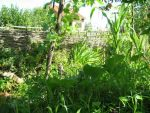Kostenlos Garten gestalten DIY Flechten - Der einfache Weg Flechtwand als Stuetzwand