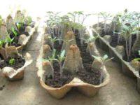 Samen erfolgreich keimen lassen - Die beste Methode Samen, Samenschale nach 20 Tagen
