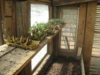Samen erfolgreich keimen lassen - Die beste Methode Samen, Glashaus u Jungpflanzen