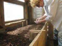 Samen erfolgreich keimen lassen - Die beste Methode Samen, Setzen im Glashaus