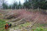 Heizen mit Biomasse - DIY mit wenig Geld Heizung bauen (Teil 1/4) abgeholzte Flaeche