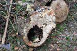 Heizen mit Biomasse - DIY mit wenig Geld Heizung bauen (Teil 1/4) Baumstrunk