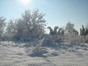 Wintereindrücke Permakultur Garten im Schnee, baeume im Schnee