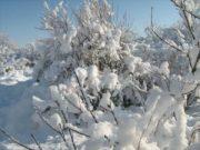 Wintereindrücke Permakultur Garten im Schnee, Straeucher im Schnee