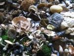 Pilz-Austellung im Herbst in Muljava Kroatien
