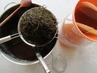 Ackerschachtelhalm-Tee abfiltern bei Quitte als Baumpatenschaft