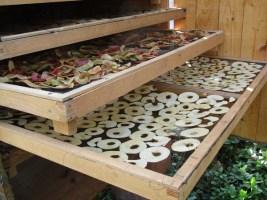 Trockenobst aus unserem Solartrockner hier bei Alten-Wohnheim & Landhotel im Permakulturgarten