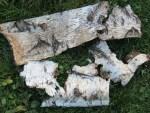 Birkenrinden Stuecke als Deko oder Anzuender
