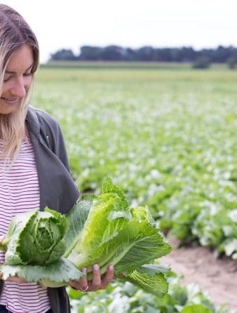 Mein Besuch bei REWE Regional Lieferant Behr Gemüsegarten