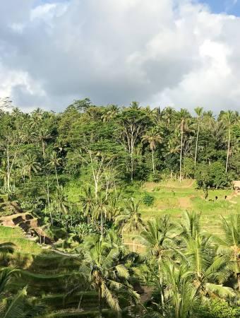 Gesunder Bali Guide (Teil 3) – Ubud, das gesunde Yoga- und Natur-Paradies