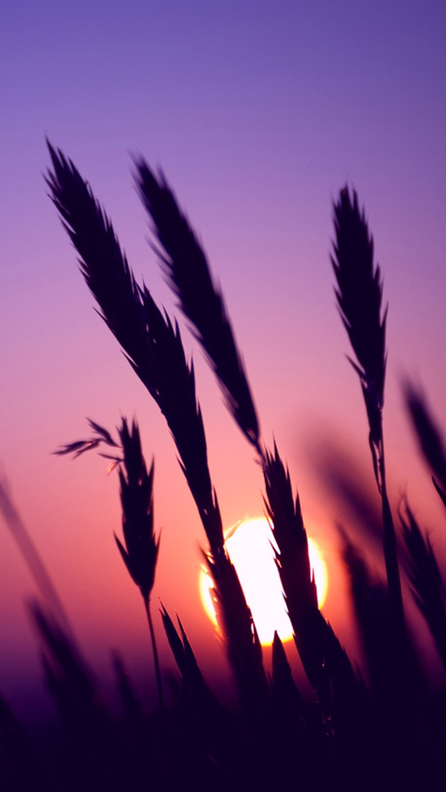 Fall Themed Iphone 6 Wallpaper Sonnenuntergang Lila Himmel Gras Iphone X 8 7 6 5 4 3gs
