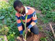 Morija Agroforstwirtschaft