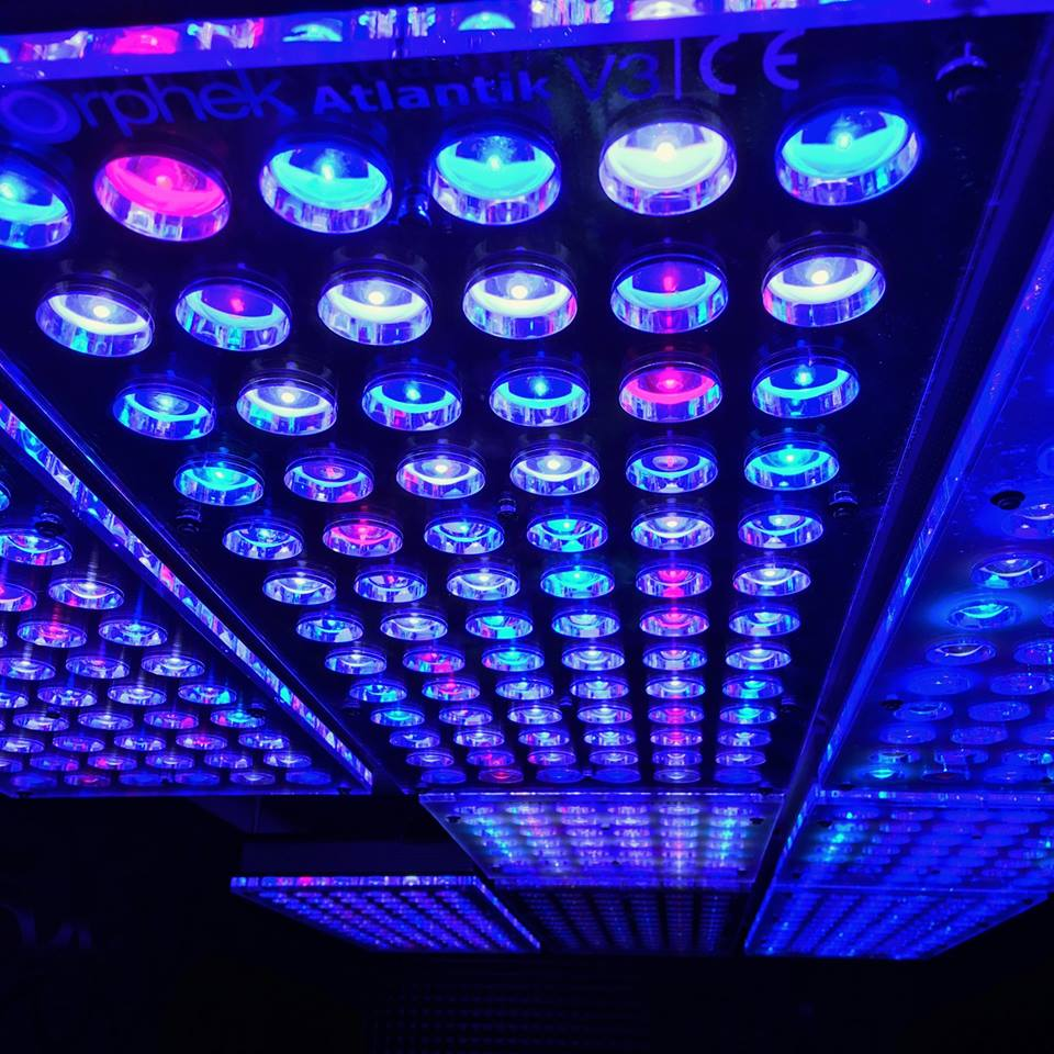 Aquarium LEDBeleuchtung  Orphek Aquarium LEDBeleuchtung