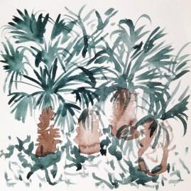Palm Trees Johannesburg