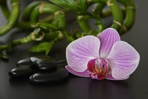 Picture of an orchid Noir