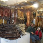 Fur ready for the auction, 2012