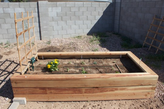 Full view of the raised garden box I built