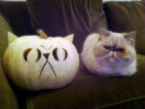 prumpkin cat