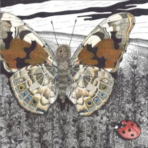 Knape, Wendi. Painted Lady w/ Ladybug, 2008. Ink and colored pencil on paper.