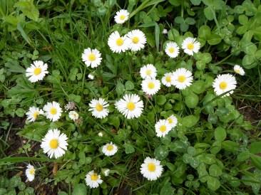 Flora spontană