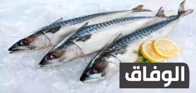 انواع الاسماك في الجزائر