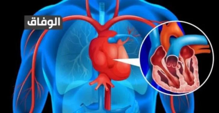 كمية الدم في جسم الانسان