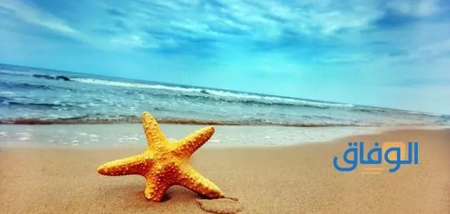 رؤية البحر في المنام