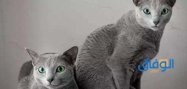 لماذا تهرب القطط يوم عيد الاضحى