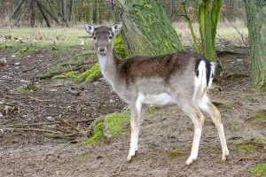 How To Keep Deer Out Of Your Yard Bedrooms Backyards