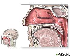 Illustration of nasal anatomy