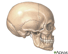 Illustration of the skull and jaw bones