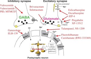 Mechanism Action of Gabapentin