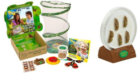 Deals Finders Amazon Insect Lore Live Butterfly Growing Kit