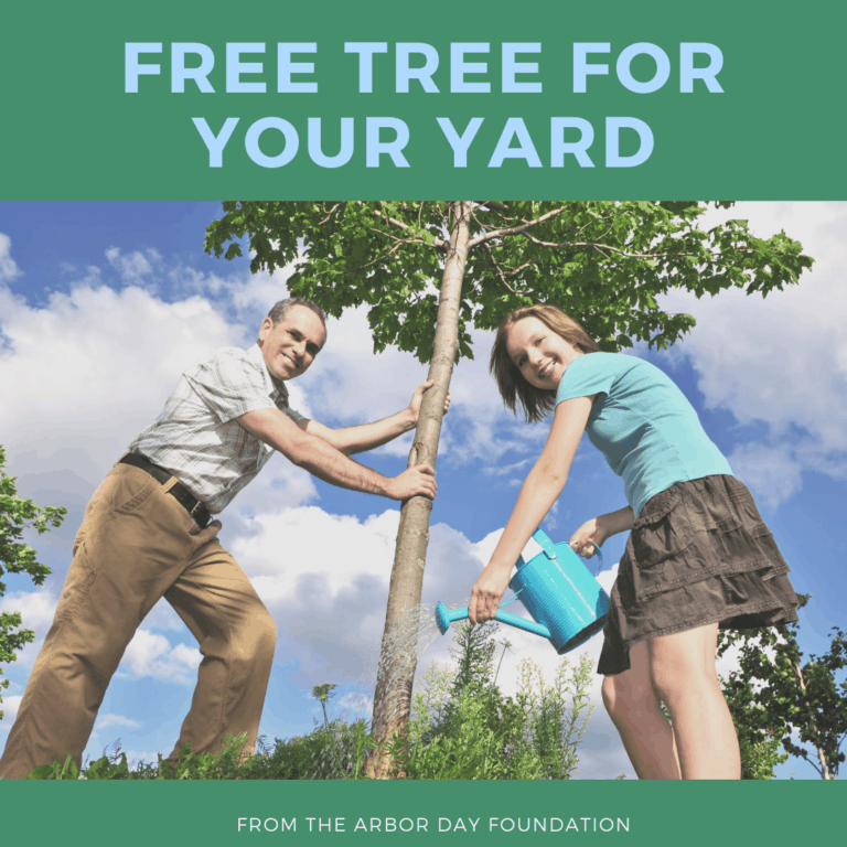 Free Tree For Your Yard from the Arbor Day Foundation!!